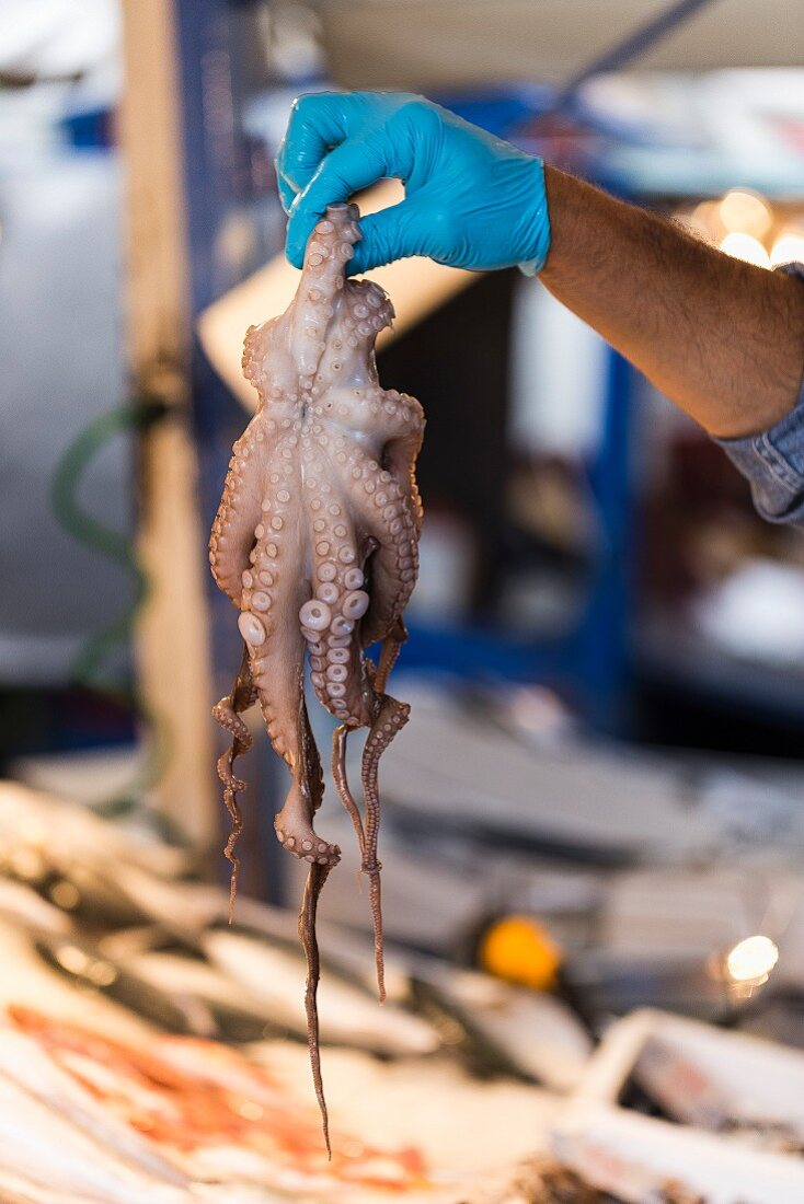 A hand holding a fresh octopus at a market