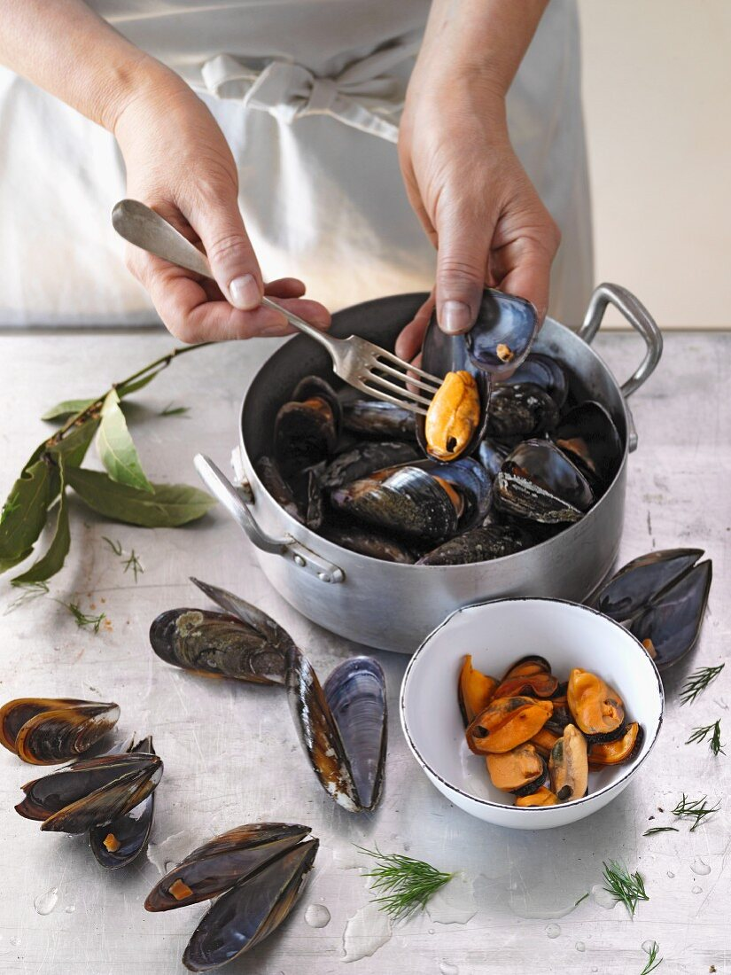 Mussels being removed from their shells