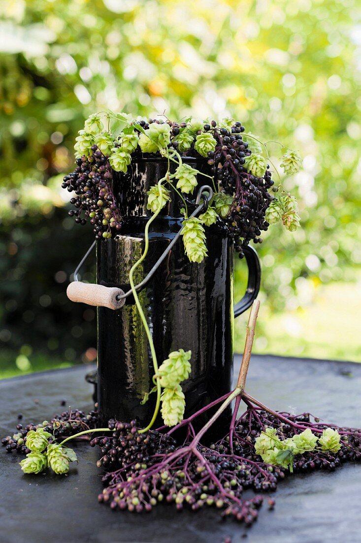 Elderberries and hops umbels in an old black enamel milk churn