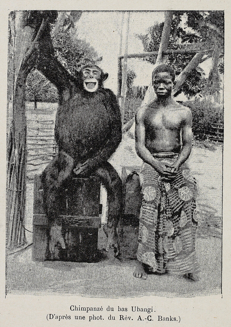 chimpanzee sitting with a young boy