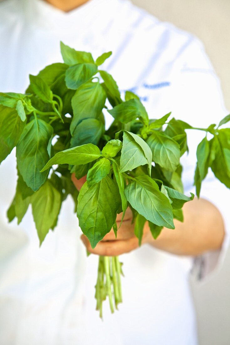A female chef holding a bunch of fresh basil