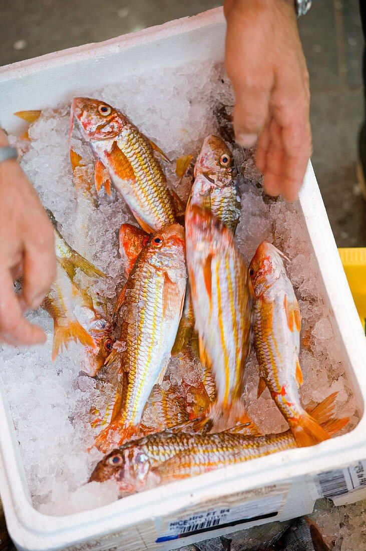 Fresh red mullet in Nice, France