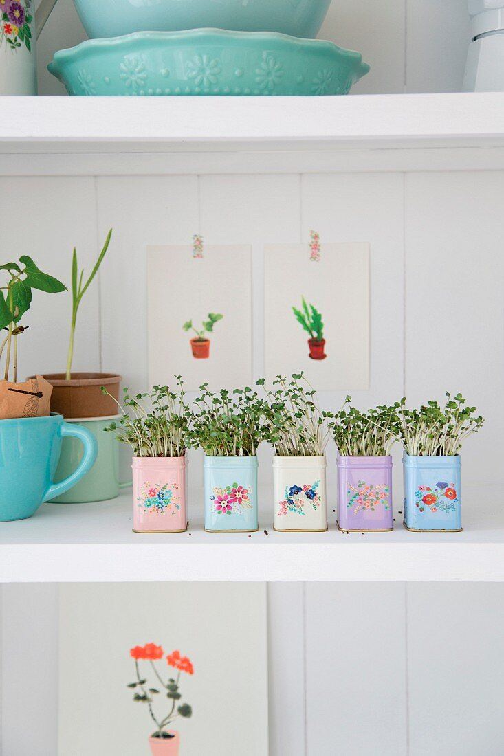 Home-sown sprouting seeds on kitchen shelves