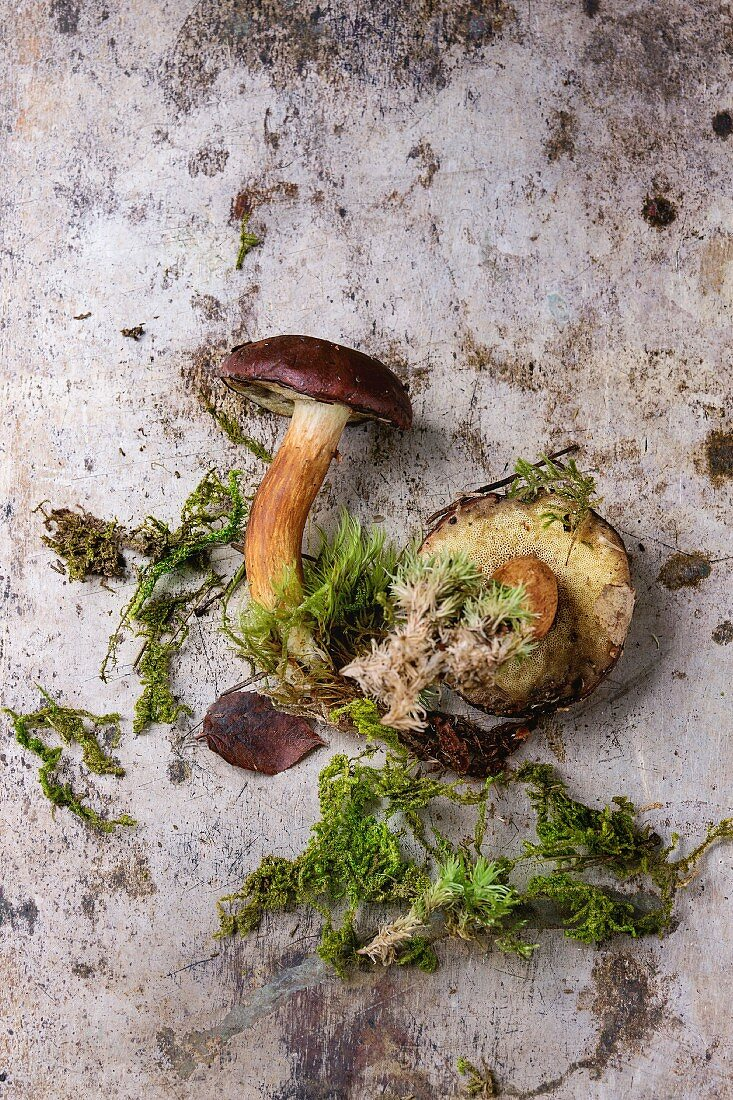 Porcini mushrooms with roots and moss on a vintage metal surface