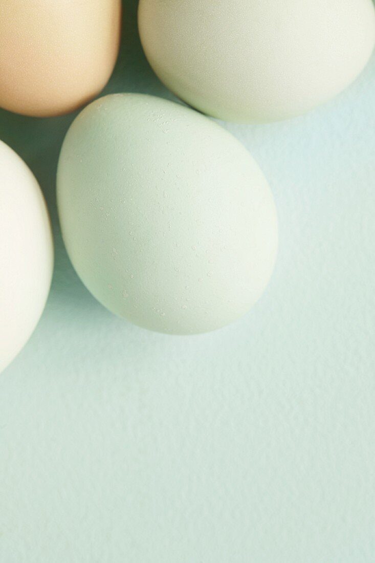 Eggs with pale green shells