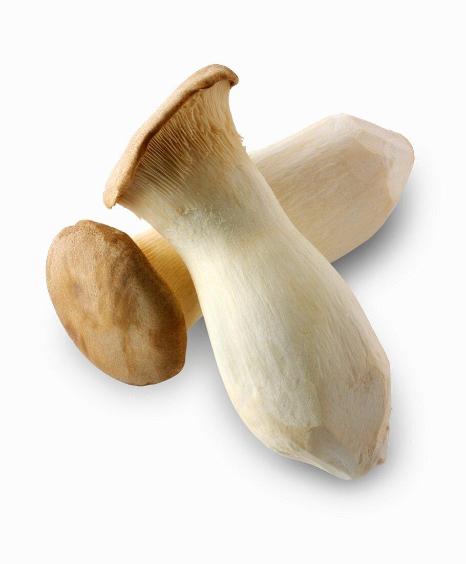 Two fresh king trumpet mushrooms