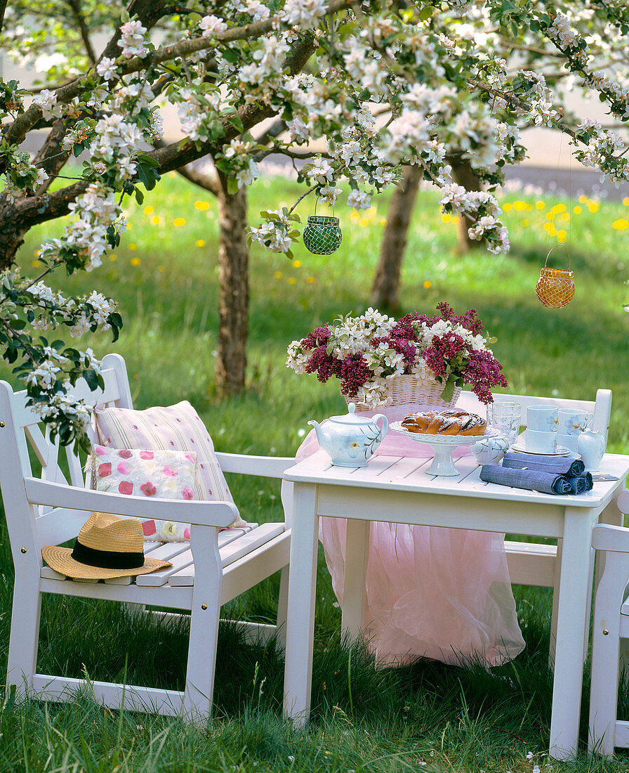 Seating under a blossoming apple tree (Malus)