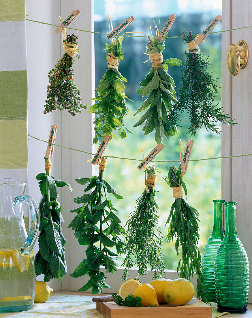 Herbs hung up to dry