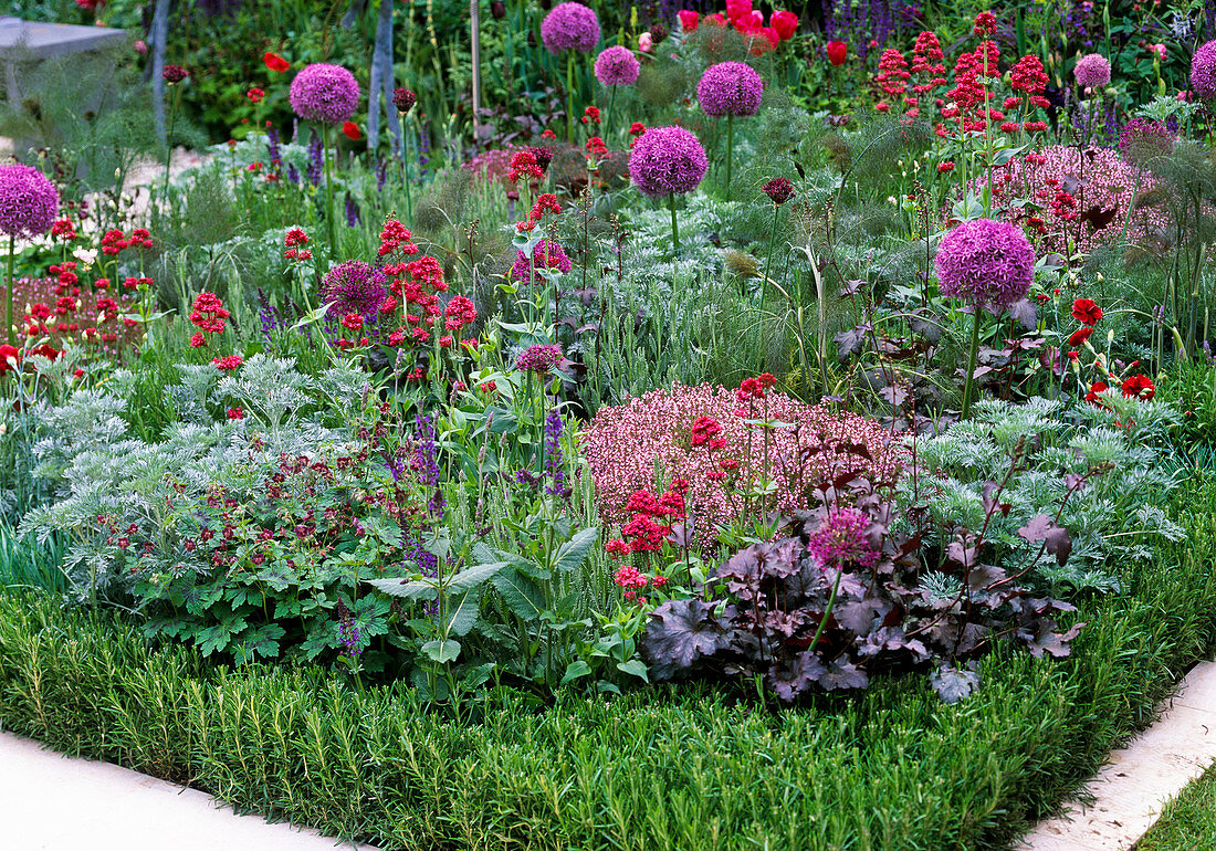 Beet with perennials and herbs, rosemary as bedding border