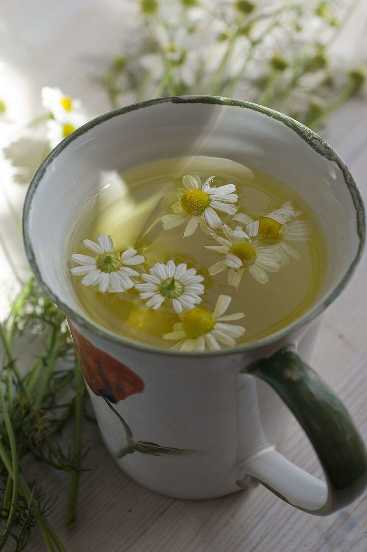 Matricaria chamomilla, flowers in chamomile tea cup