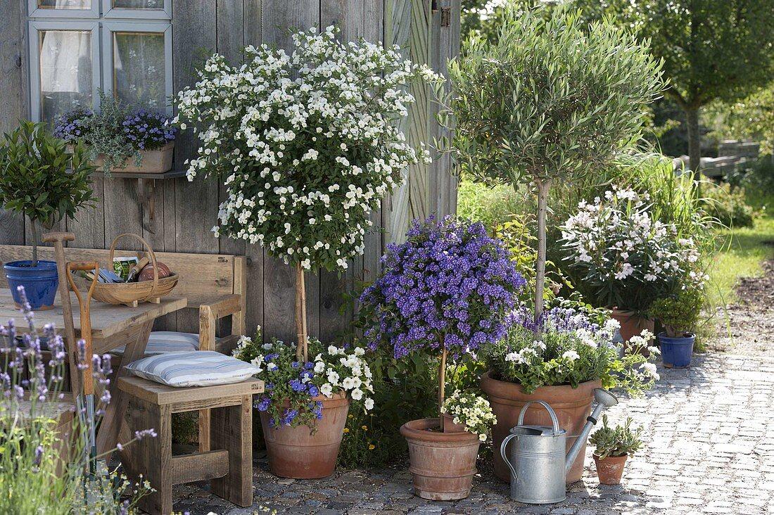 Terrasse mit Kübelpflanzen am Gartenhaus – Bild kaufen – 20 ...