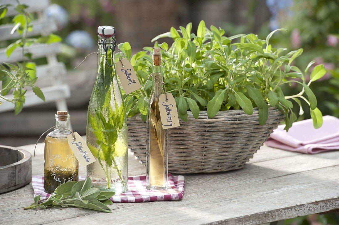 Plant the sage basket
