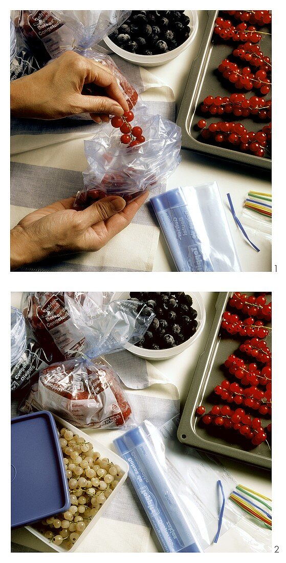Berries Being Place In Bags For Freezing