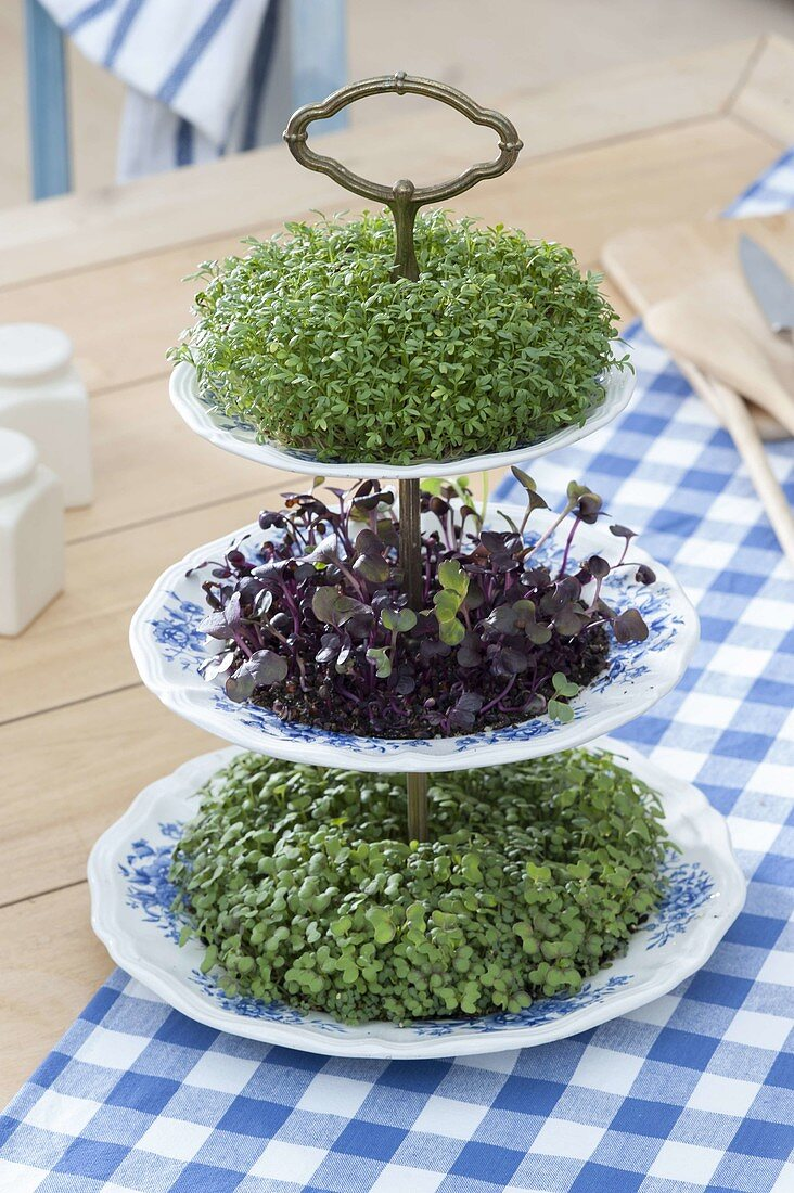 Ceramic etagere with cress and sprouts as edible table decoration