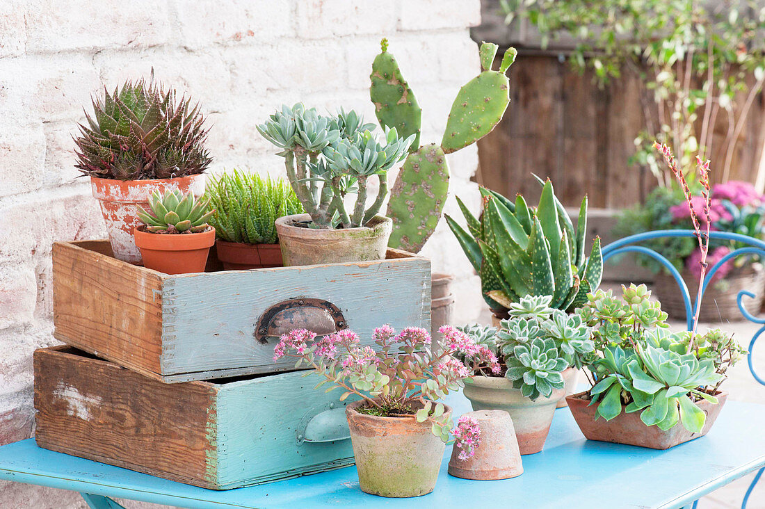Succulents spend the summer outside