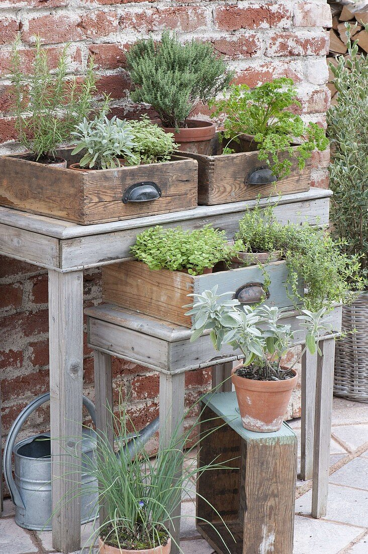Herbs in clay pots placed in old wooden drawers