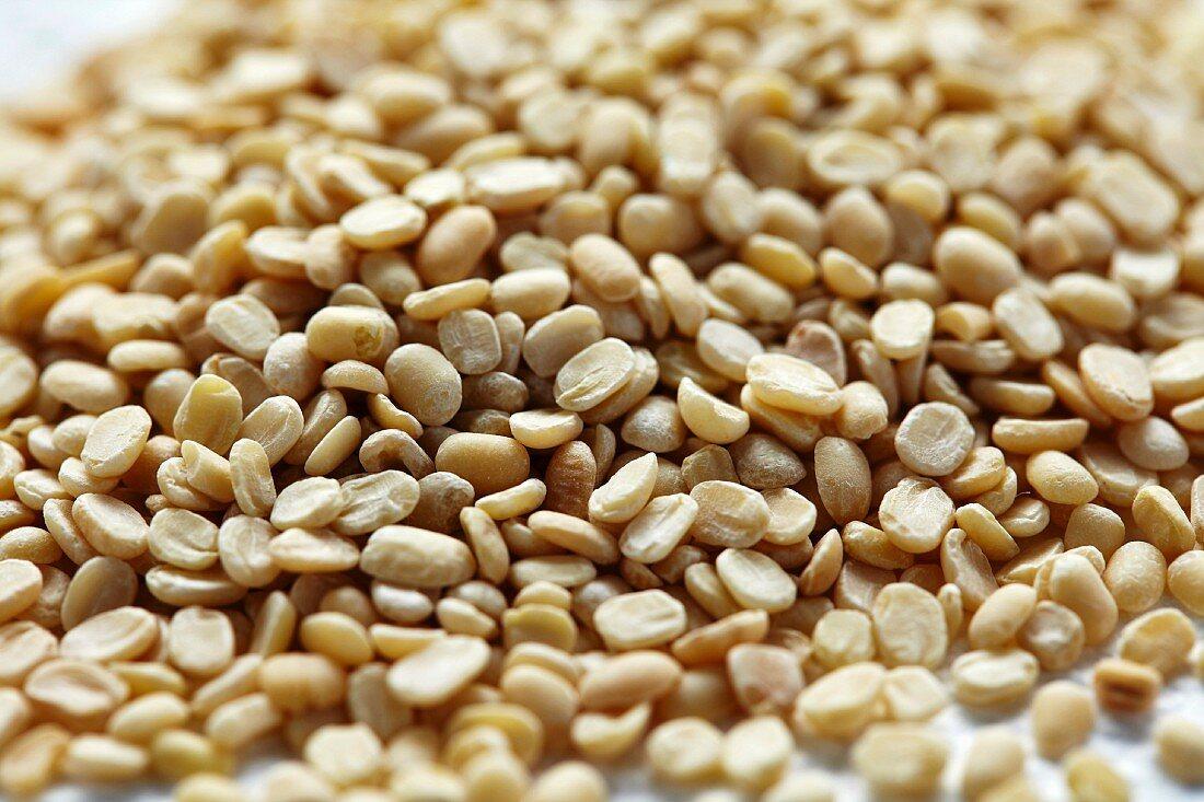 Hulled urad dal Indian lentils (Vigna mungo)