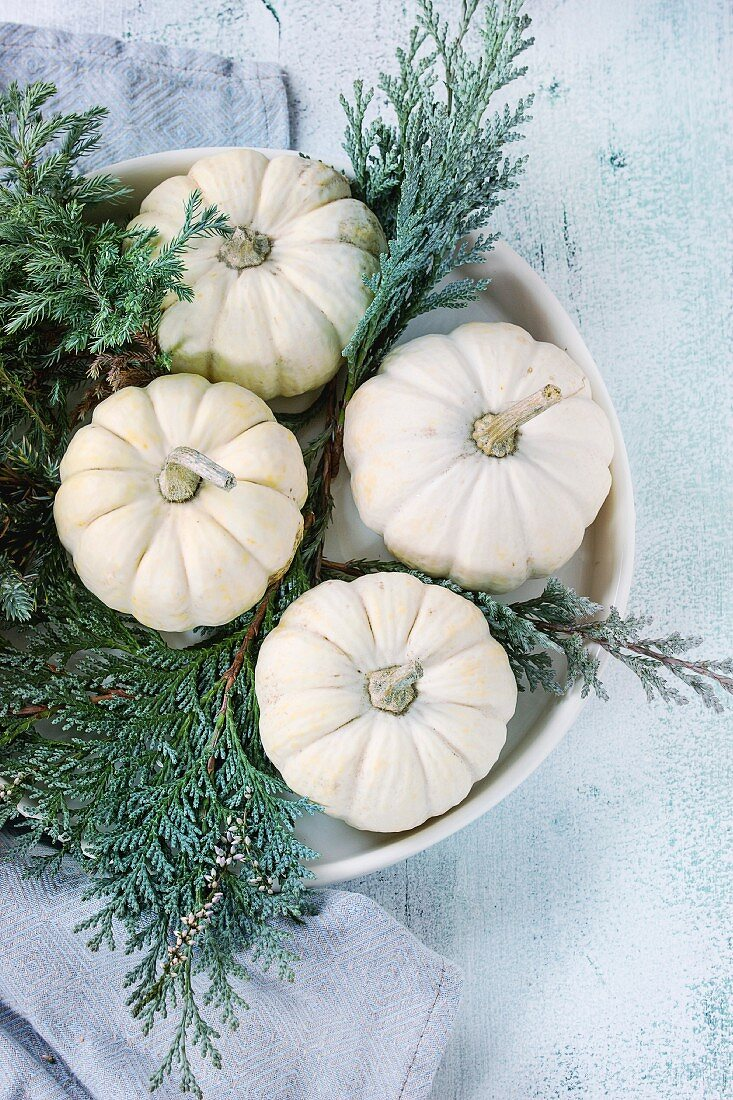 Holiday table decoration with white decorative pumpkins and thuja branches on blue textile napkin