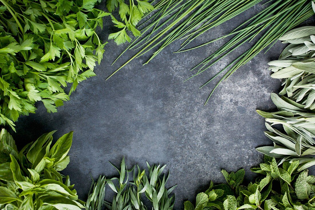 Green Herbs bordering a grey background