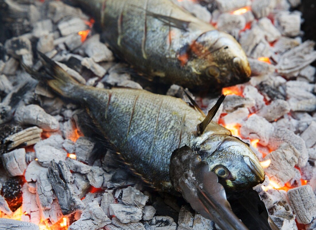 Seabream on glowing charcoal