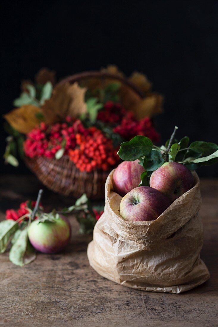 Apples in a paper bag in front of a basket of rowan berries