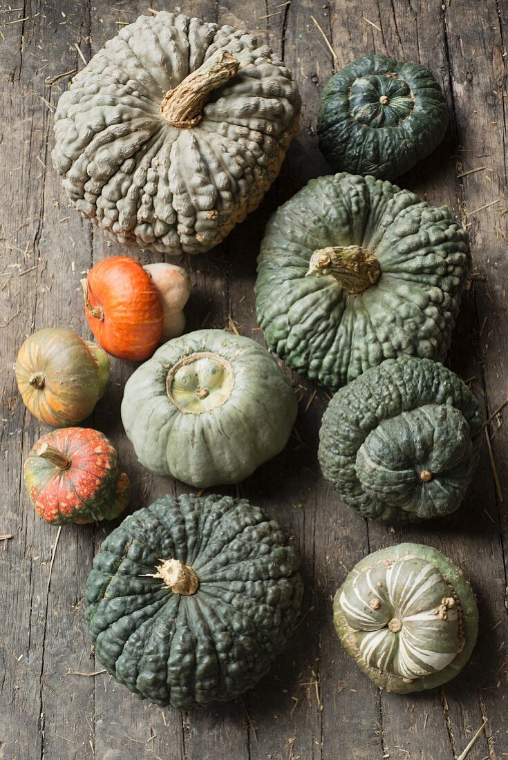 Marina di Chioggia pumpkins on a rustic wooden background