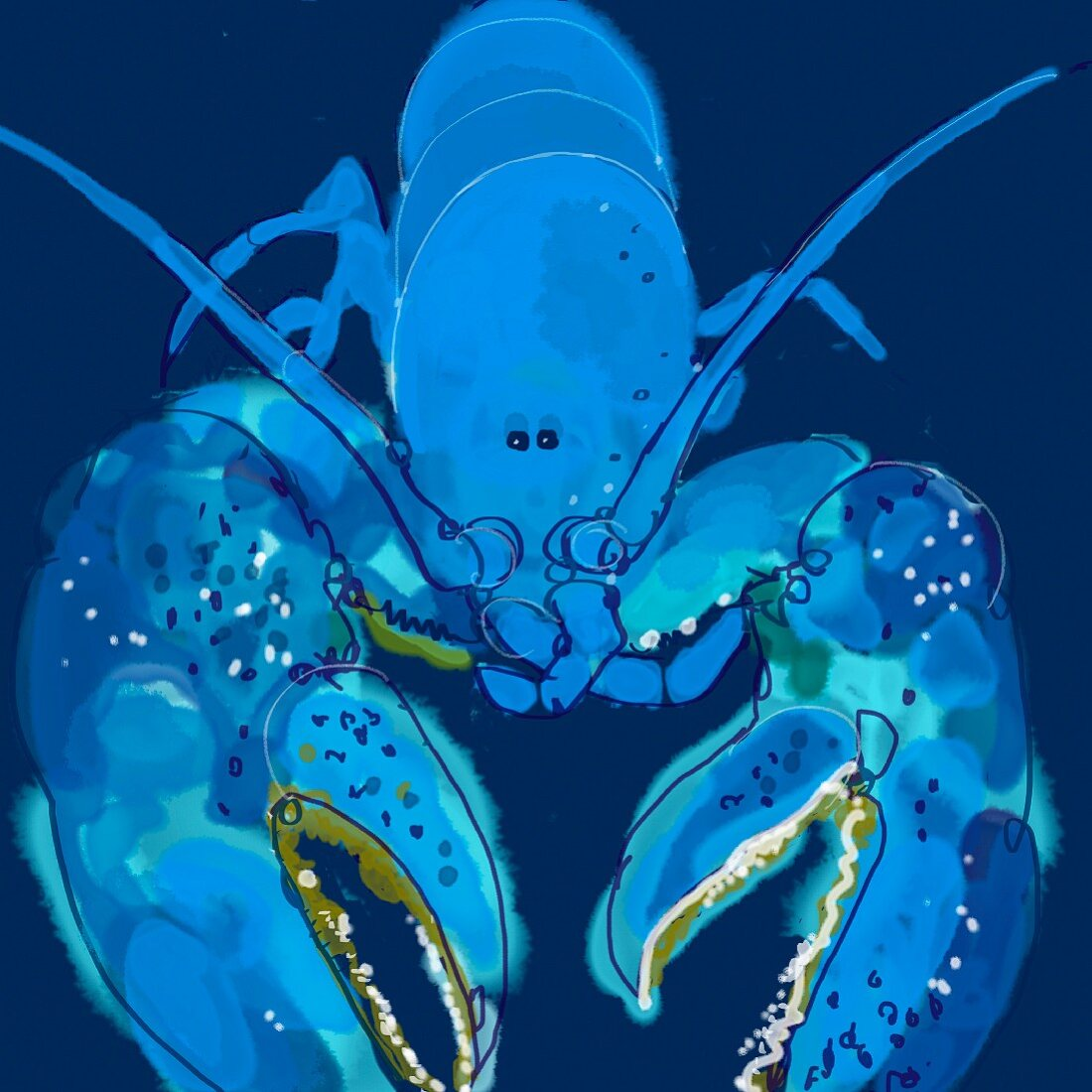 Close up of blue lobster