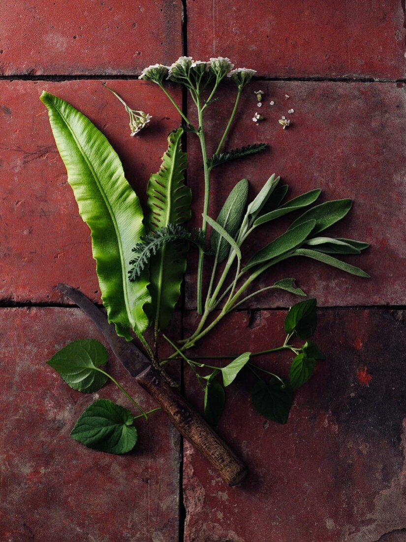 A bunch of yarrow, sage and hart's-tongue fern