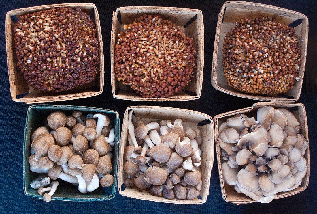 Various edible mushrooms in wooden baskets (seen above)