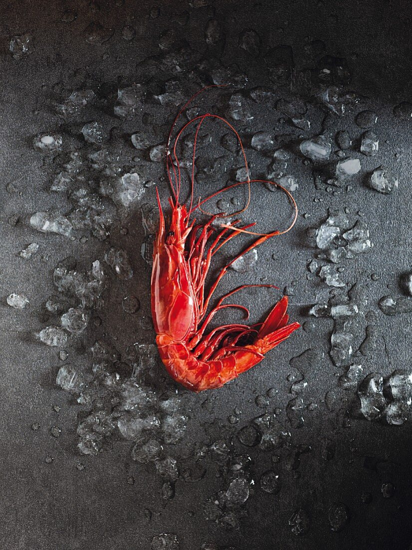 Carabinero (a red king prawn)