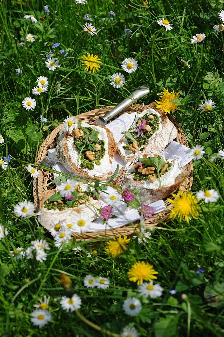 Crostini but with goats cheese, pesto and walnuts in a basket in a meadow