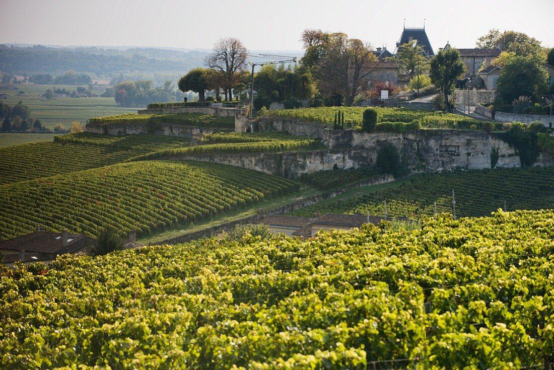 Château Ausone und Weinberge, Bordeaux, Frankreich