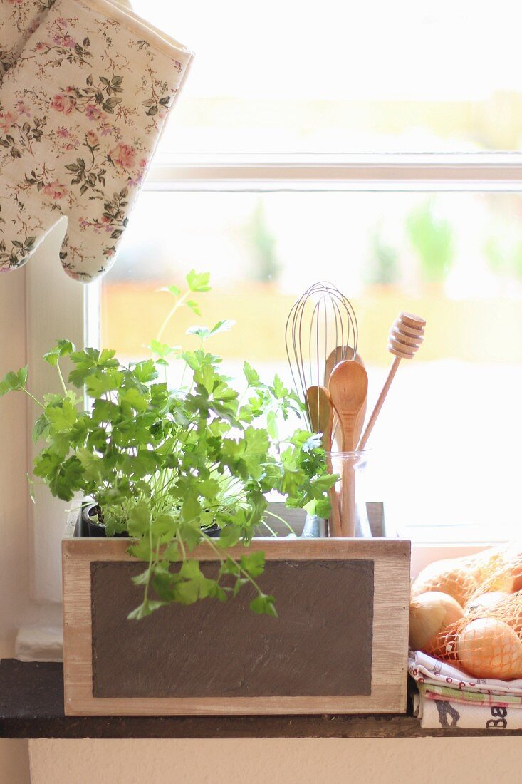 Fresh coriander and kitchen utensils on windowsill