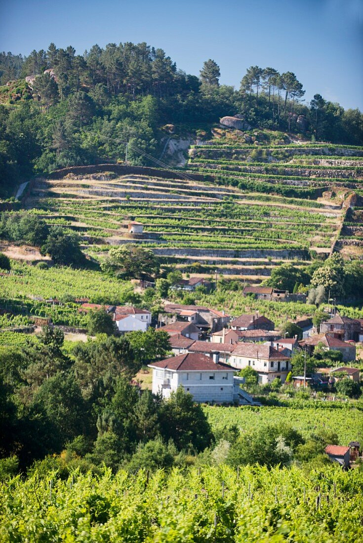Coto de Gomariz, the settlement of Gomariz