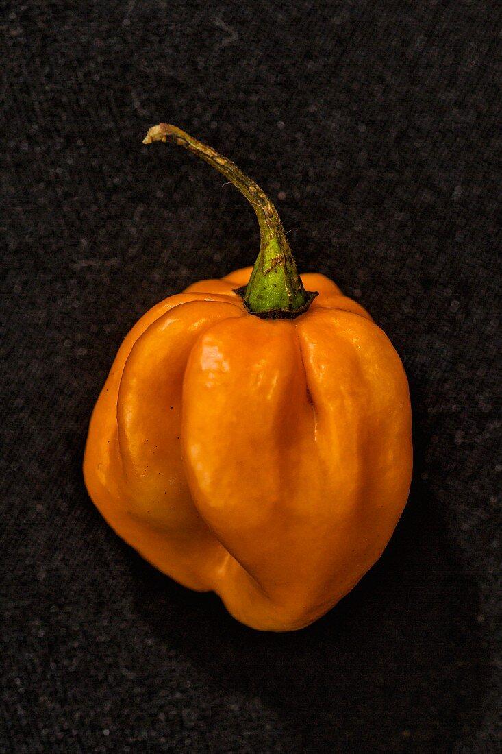 A '7 Pod Pink' chilli (a very spicy chilli pepper)