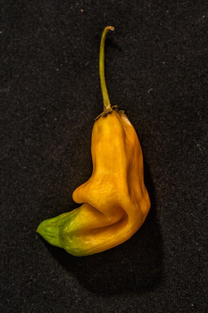 A yellow 'Aji Amarillo' chilli