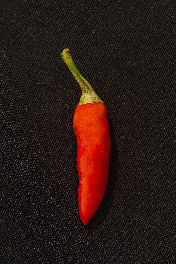 Chili 'Bird Eye' (sehr scharfe Chilisorte)