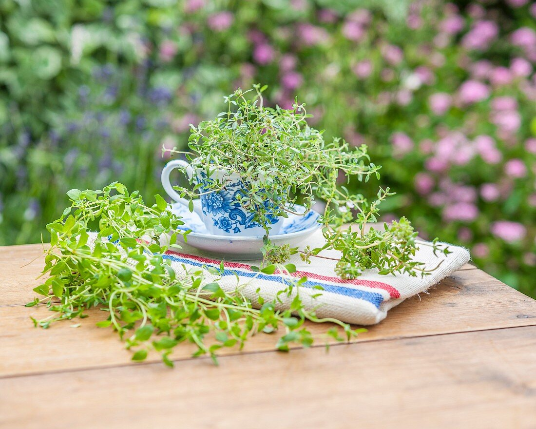 Three types of thyme on a garden table