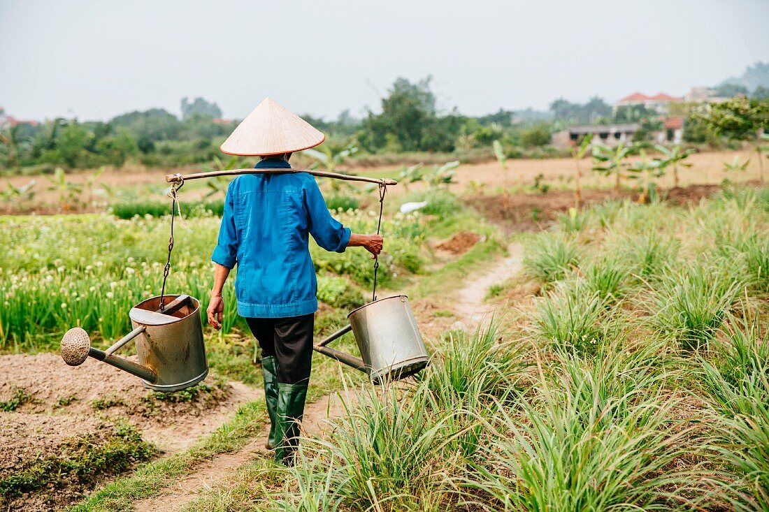 An Oriental farmer with watering cans watering vegetable fields