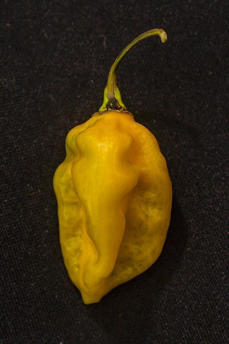 A Bonda Ma Jacques chilli pepper