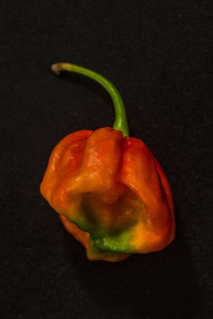 A Lucy chilli pepper