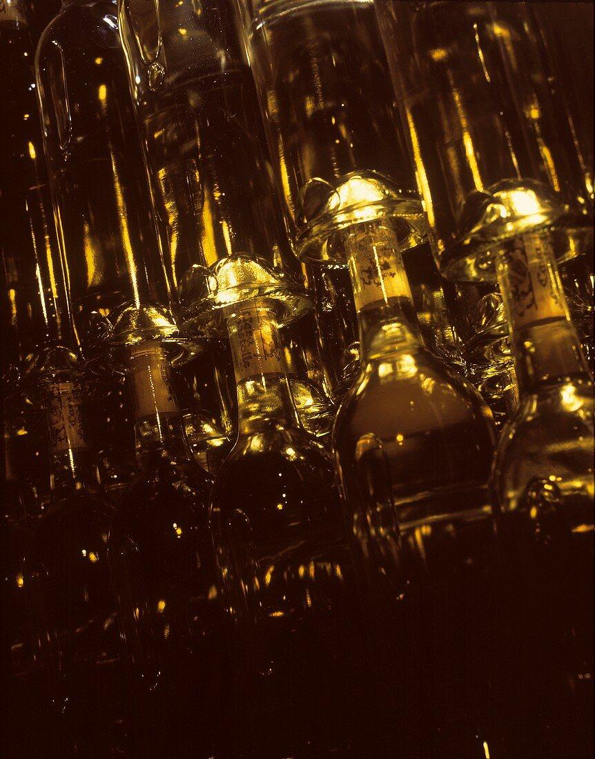 Sauvignon Blanc laid down in cellar, Santa Cruz, Chile