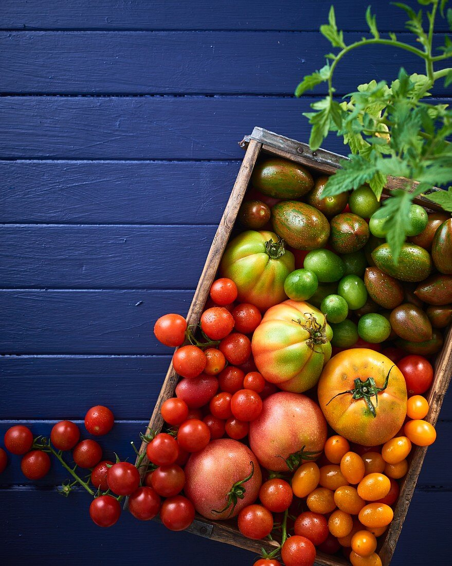 Various types of tomatoes in a wooden crate (see from above)