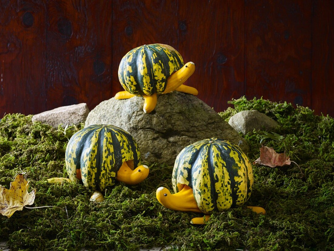 Three tortoises carved from pumpkins on moss and rocks