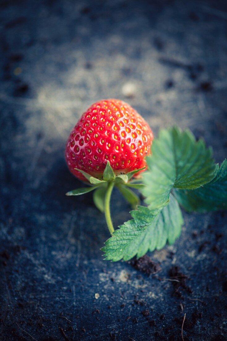 A fresh strawberry with a stem and leaf