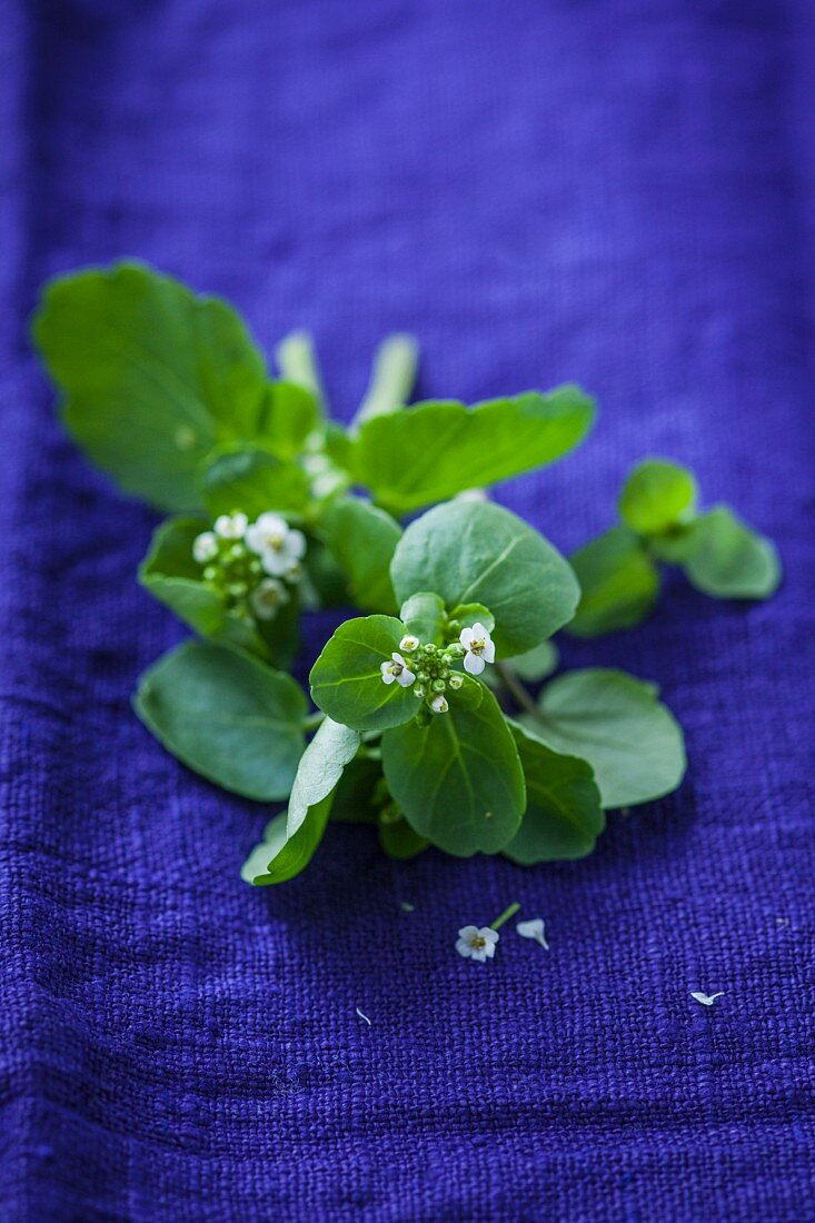 Watercress with flowers
