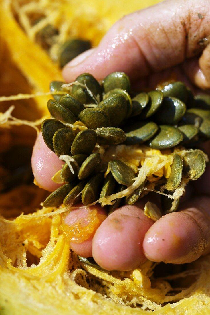 A hand holding fresh pumpkin sees (close-up)