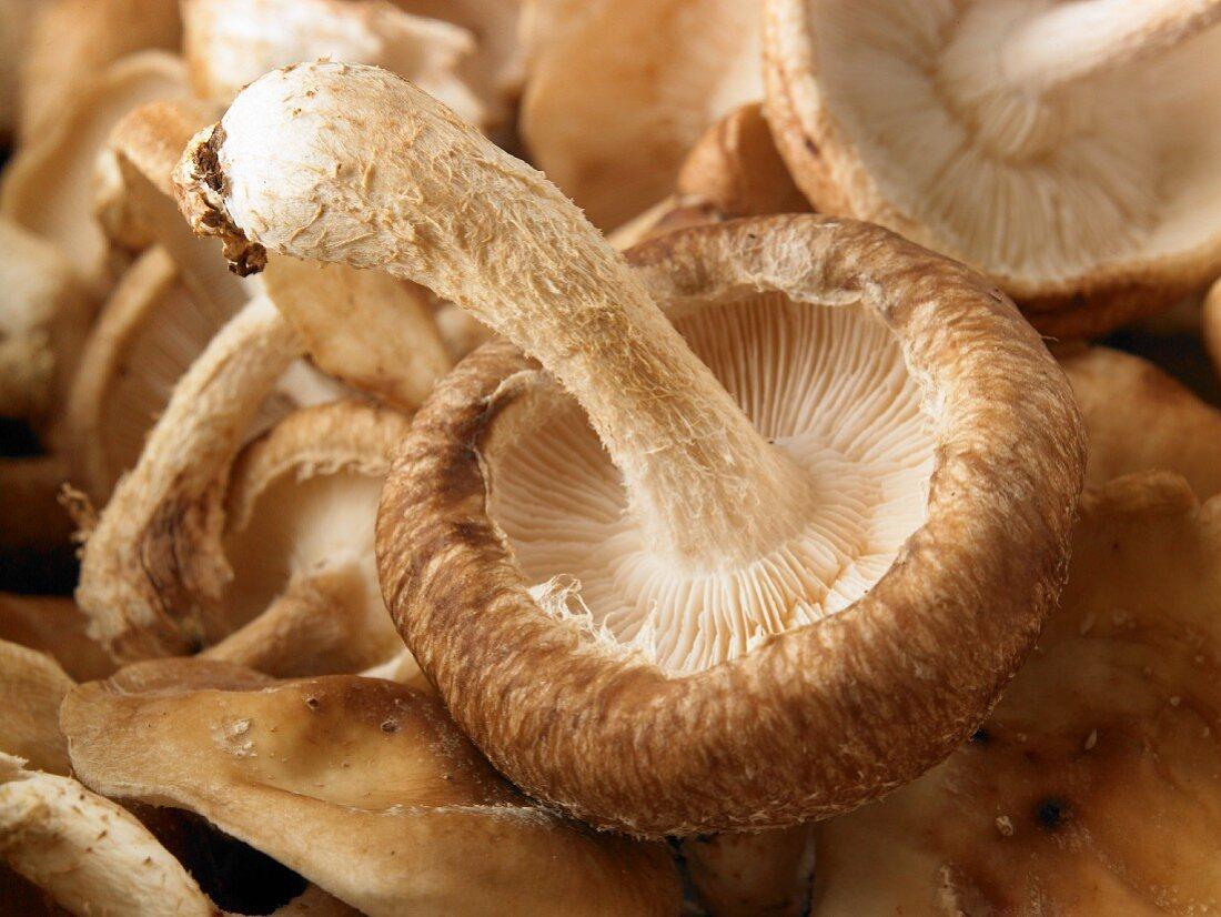 Fresh mushrooms (close-up)