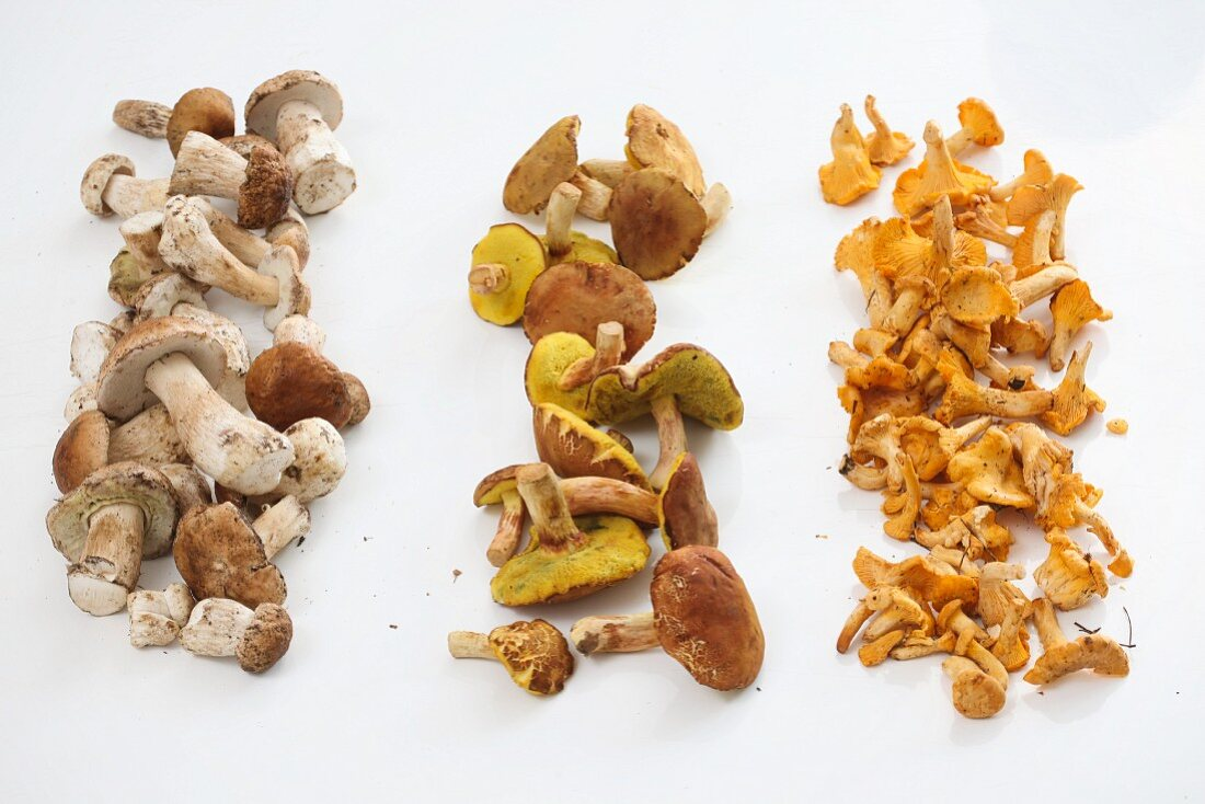 Three rows of different edible mushrooms on a white surface