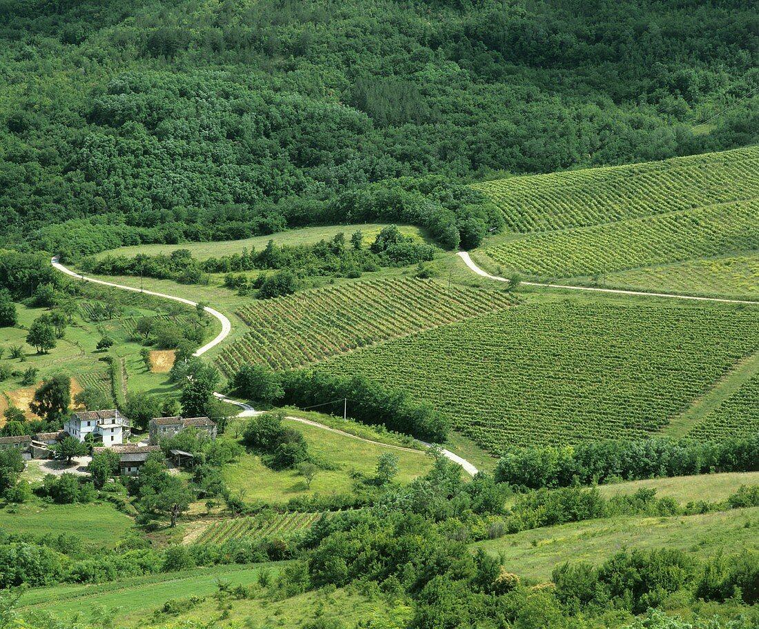 View of vineyards near Motovun, Istrian Peninsula, Croatia